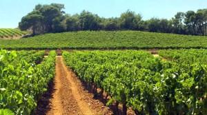 le vin bio au dit vin de draguignan